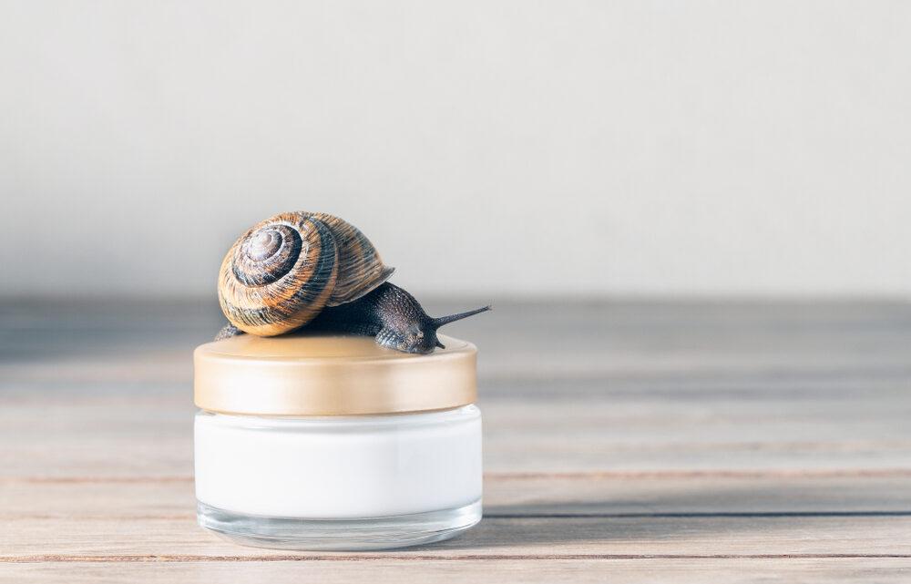 La bava di lumaca: 7 cosmetici che si ricavano da questo ingrediente
